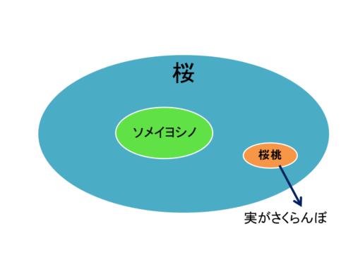 さくらんぼを漢字で書くと?花、桜との違いは? 2