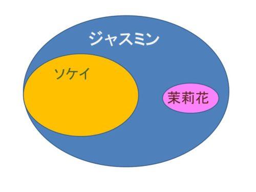 ジャスミン・ジャスミンティーの漢字の書き方 茉莉花の意味と由来 2