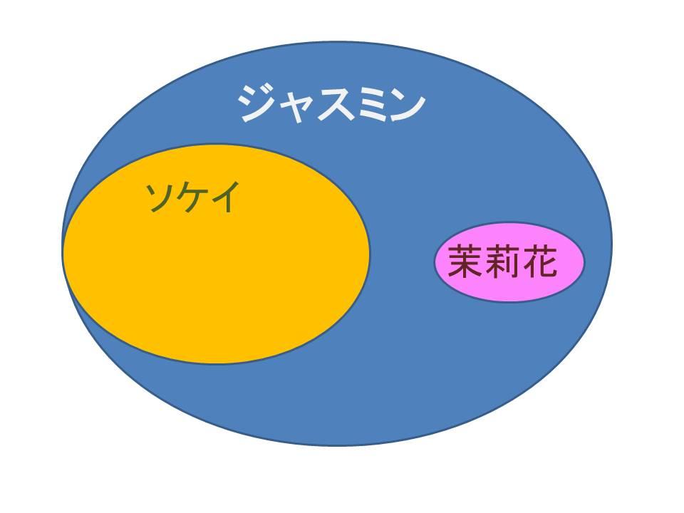 ジャスミンは漢字で茉莉花じゃない?正しい漢字と意味は?  1