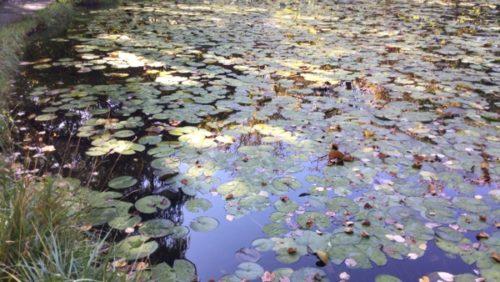北大 北海道大学 池