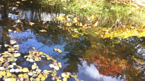北海道大学 紅葉 大野池
