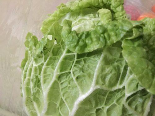 ふるさと納税野菜定期便 松浦市 白菜